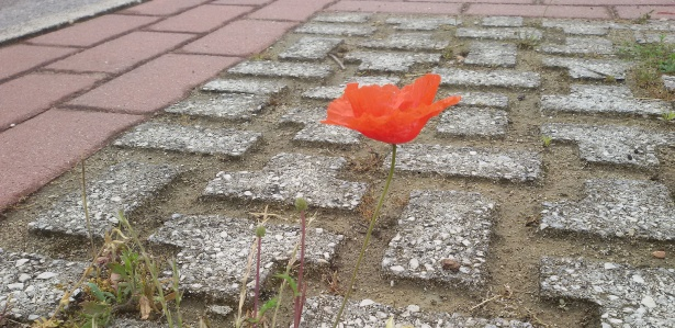 A red flower blooming through the cracks shows how resilience has lead ego to become a top international exporter.