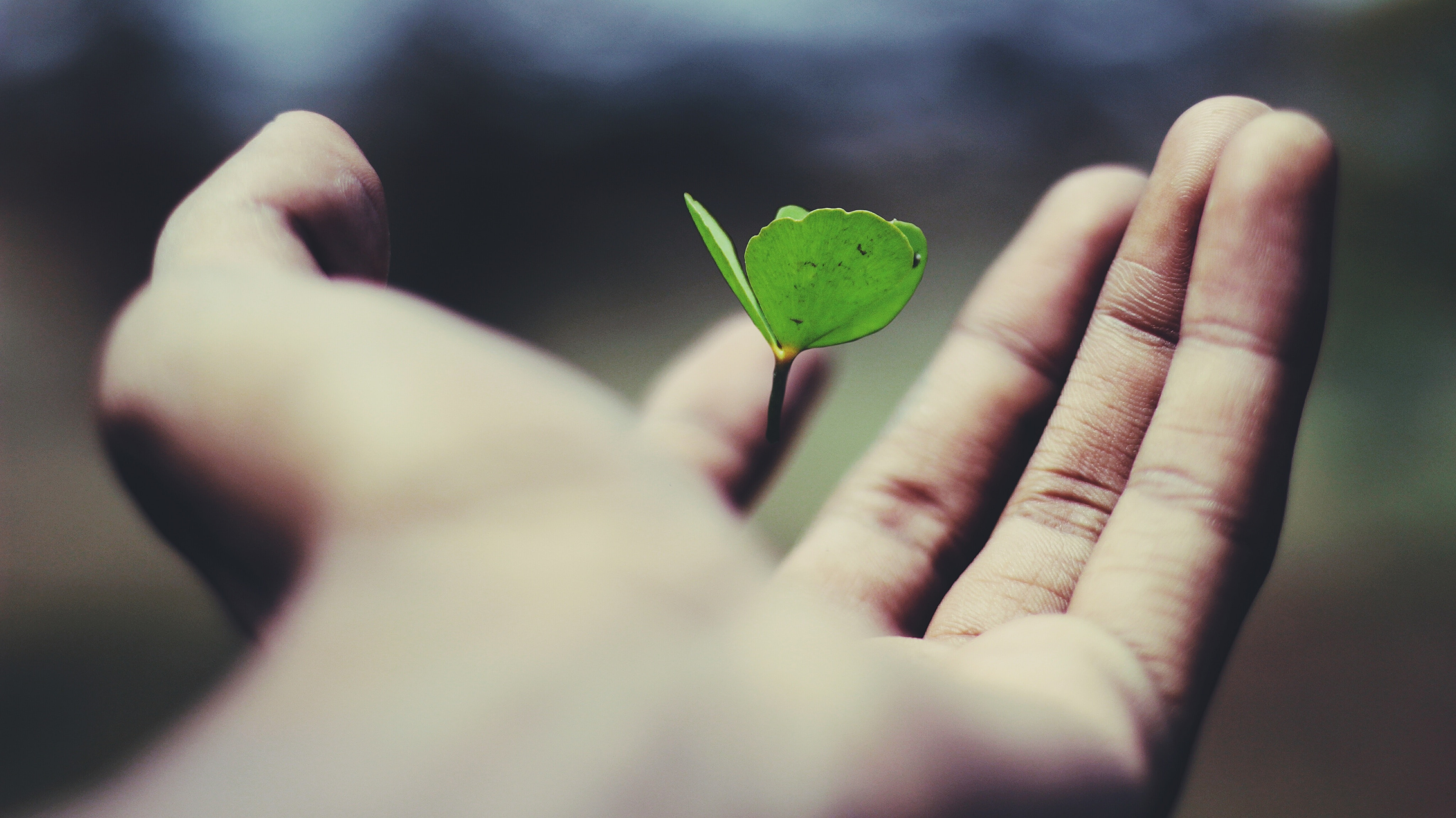 Person holding a floating green plant.